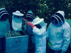 Honninghøst2